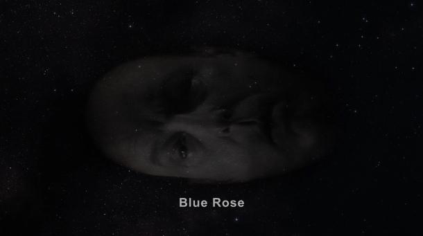 303 5 major briggs blue rose