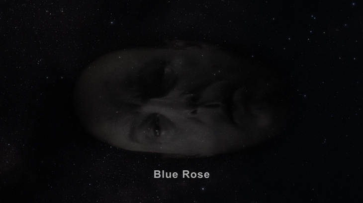 303 5 major briggs blue rose
